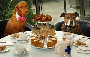 Tea parties for pets? How is that a thing? Even in England?