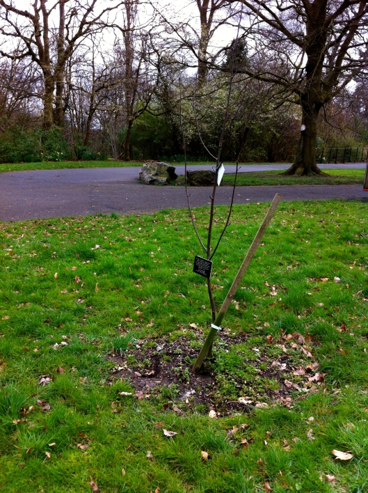 "This tree is planted in memory of our mother, Johan Gillon.  A very brave lady and devoted mother who despite the many adversities in her life never gave up and was an inspiration to us all. ""Till we meet again"" with all our love. Christine, Iain and Rosemary."