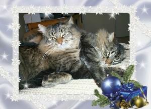 Cats Christmas