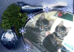 Kittens Christmas
