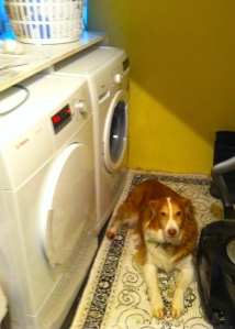 Like my dog, the washer was prone to fits. Every few months, my clothes washer wrinkler nemesis would regurgitate all the water in its tank, and have to be emptied by hand, usually when something urgent was occurring in the kitchen (like this).