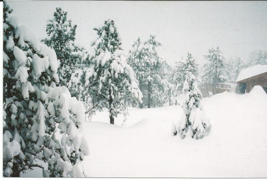5.5 feet of snow Nederland Deep Snow