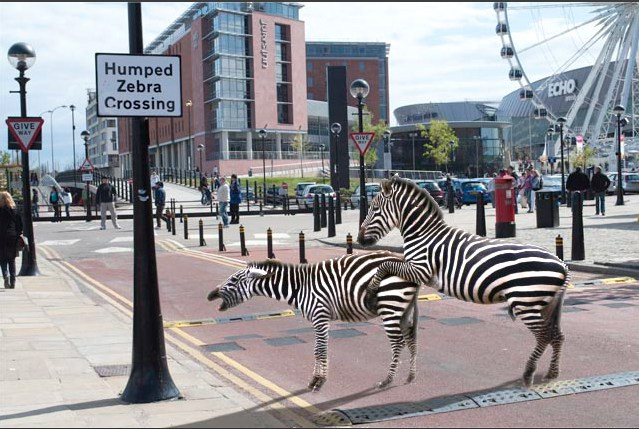 [image credit: hairyphotographer.com] http://hairyphotographer.co.uk/humped-zebra-crossing/