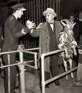 [image credit: The Billy Goat Tavern] http://www.billygoattavern.com/legend/curse/