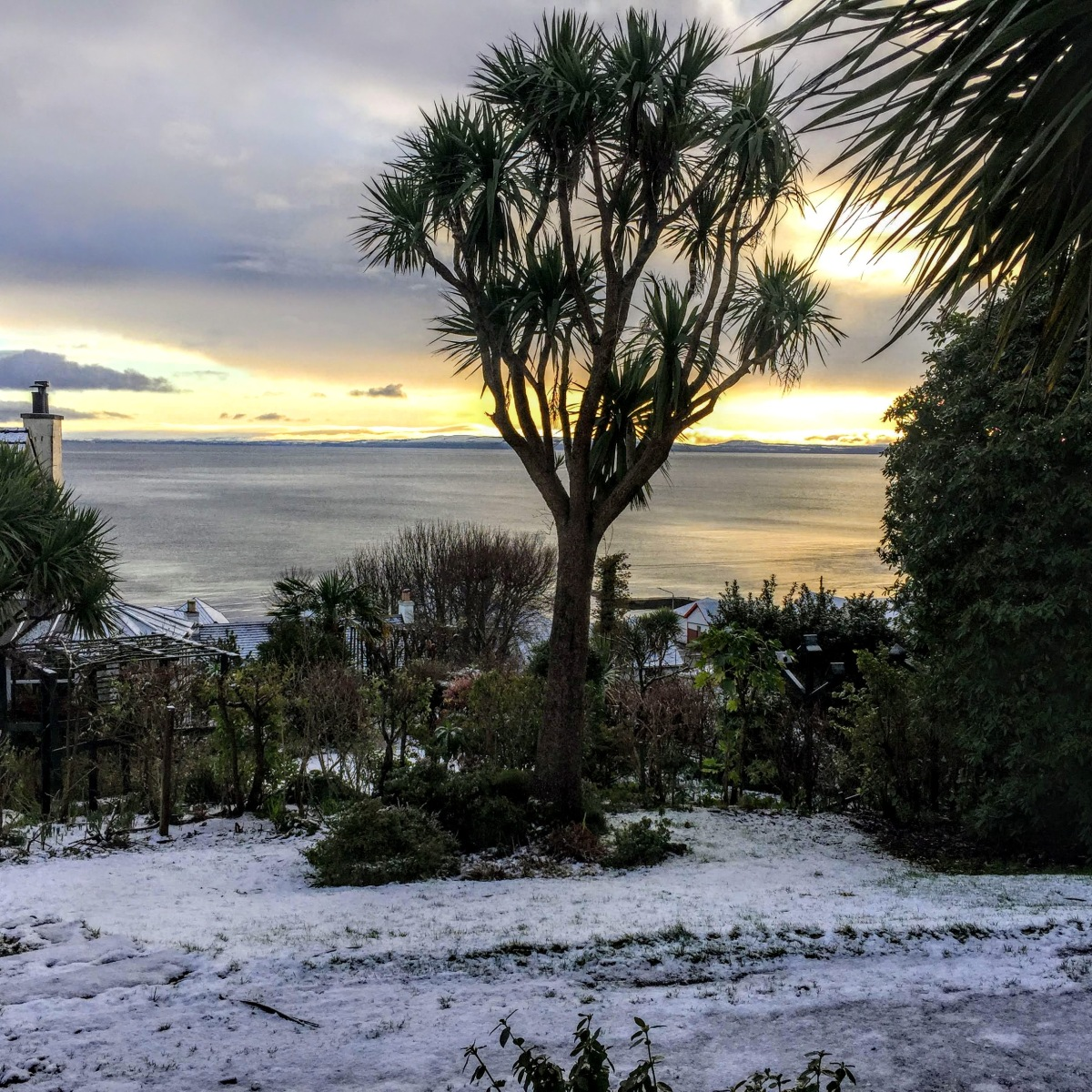 Island winter: snow and palm trees.  #Scotland #WordlessWednesday